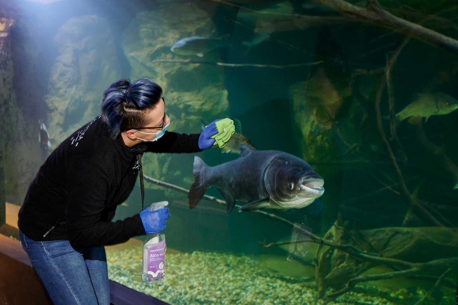 Protuepidemiološke Mjere U Akvariju